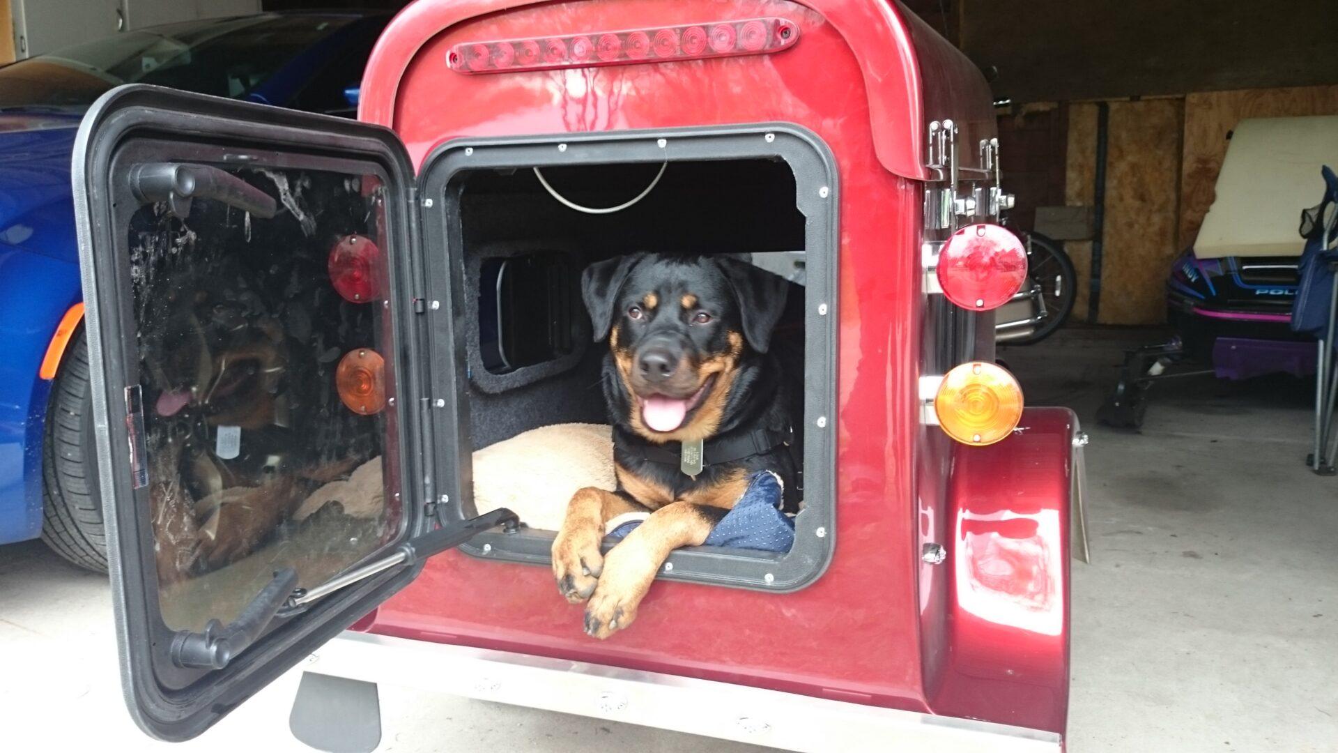 A rottweiler inside a cargo trailer