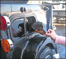A dog riding a black cargo trailer