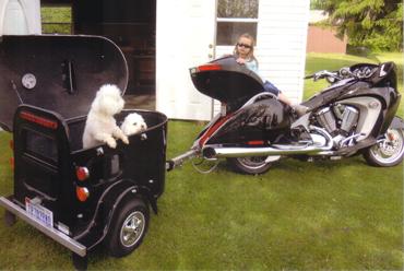 Two dogs inside a black cargo trailer