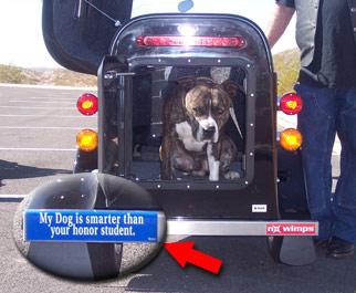 A large dog inside a cargo trailer