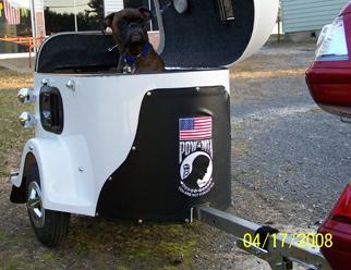 A cute dog inside a cargo trailer