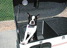 A pooch riding a white pet trailer