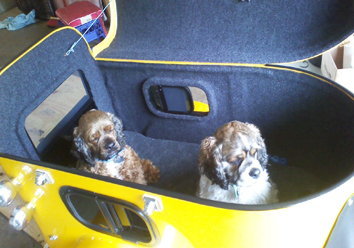 Two dogs inside a yellow cargo trailer