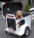 A pooch riding a white cargo trailer