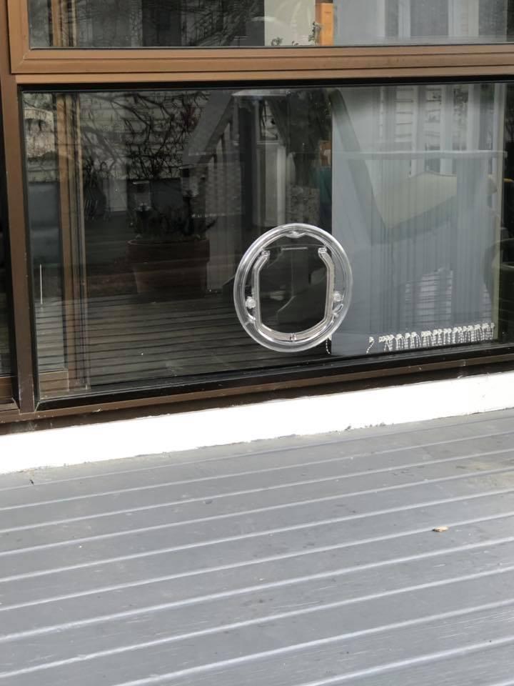Pet doors Auckland
