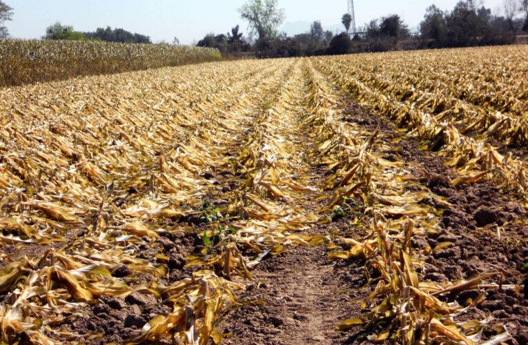 Fedeagro: Sin productores no será posible rescatar el campo