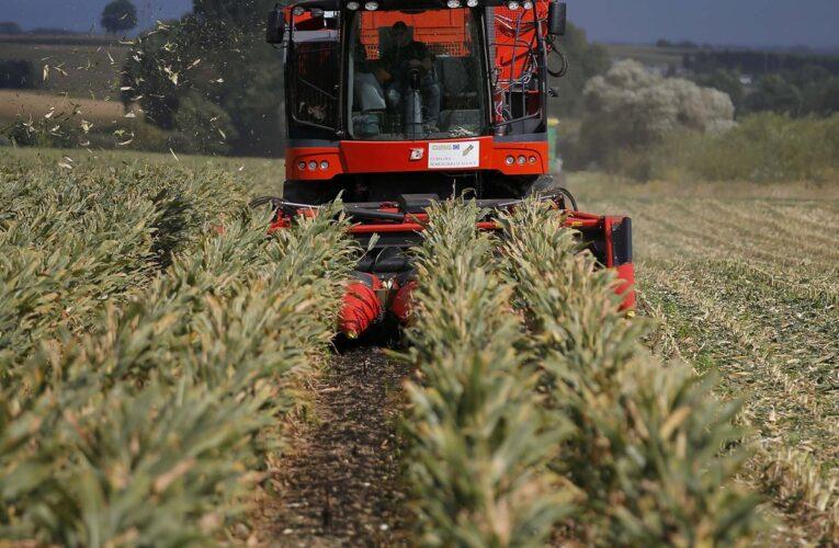 Fedeagro: Apenas se produce el 20% de los cereales que requiere el país