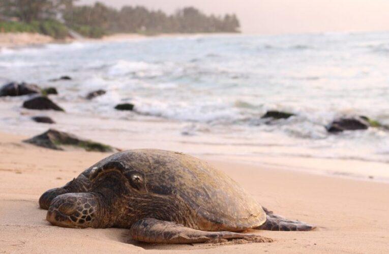 Hallan 351 tortugas muertas en México