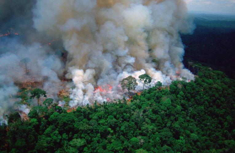 Enjuiciarán a Evo Morales por ecocidio