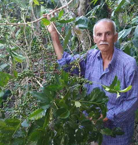 Carayaca tendrá producción de café en diciembre