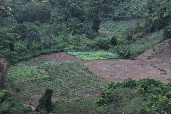 Agricultores de Carayaca desasistidos desde hace 7 años
