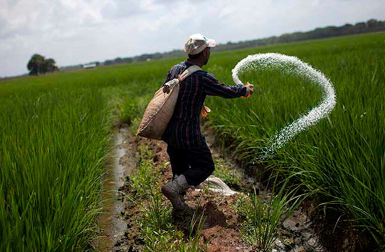 Fedeagro advierte caída en producción de maíz y arroz