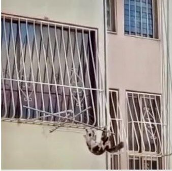Preso por lanzar a su gata desde un piso 20