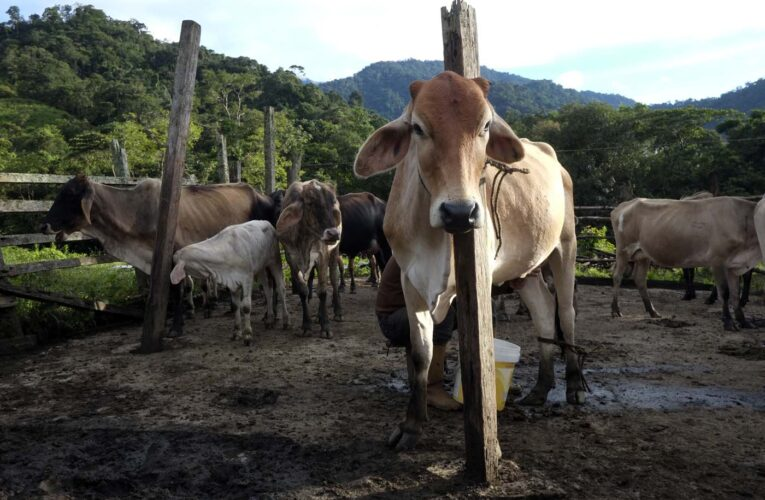 Fedenaga: Venezuela produce 40% menos carne