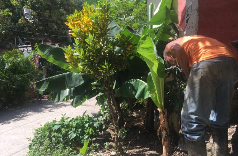 En la calle José Antonio Páez sobreviven gracias a la siembra