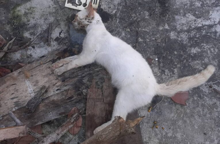 Envenenaron gatos y guacharacas en El Teleférico