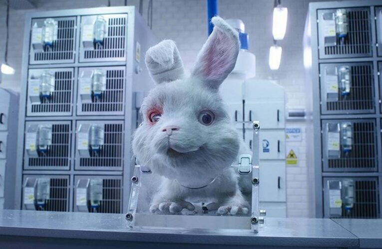 Se viraliza campaña para prohibir las pruebas de cosméticos en animales
