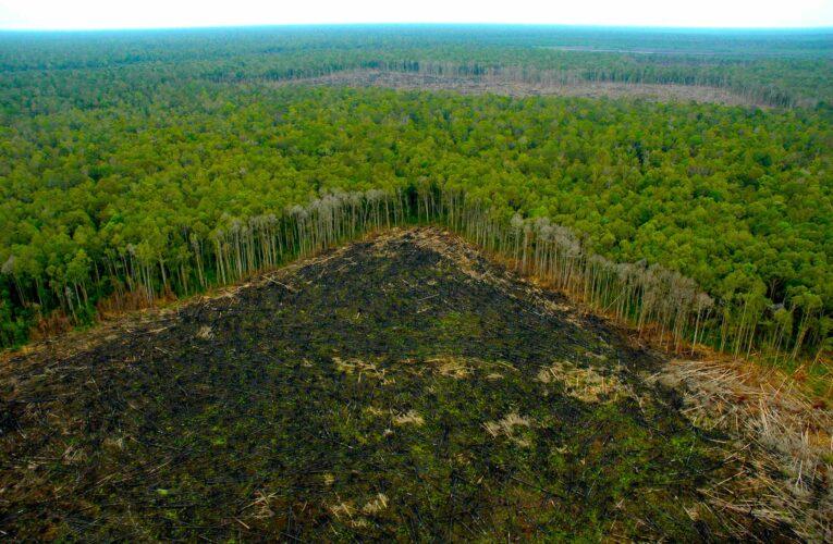 Bolsonaro promete a Biden acabar con deforestación ilegal en Brasil para el 2030