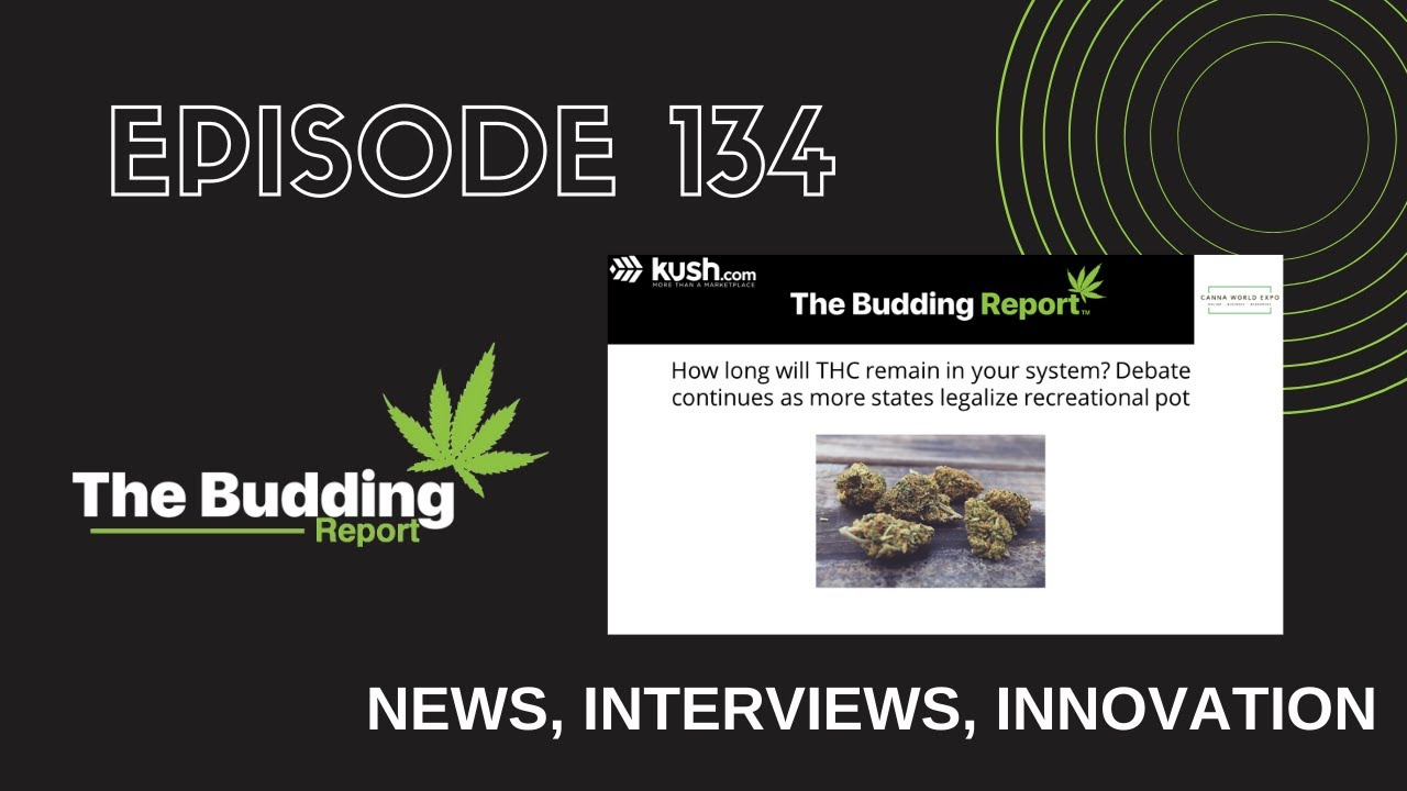 TBR 134   How long will THC remain in your system?   Shelby Stanley and Brian Holler - youtube
