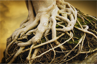 roots in Christ