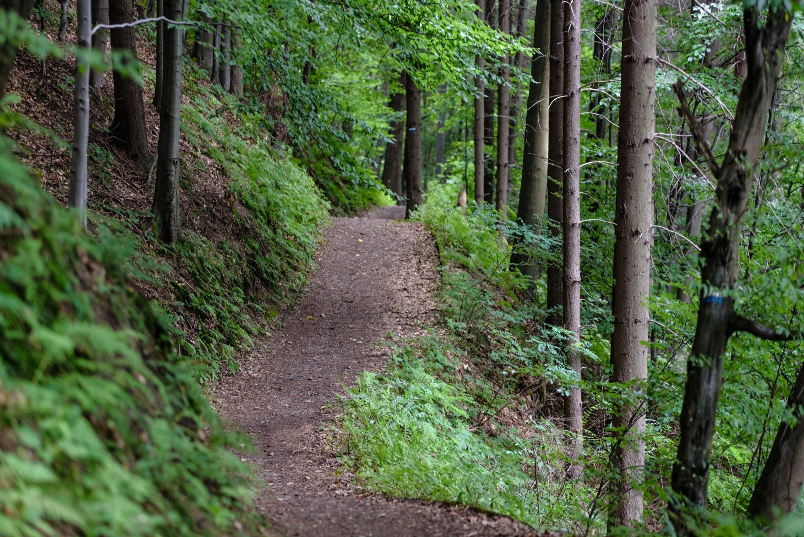 Morristown Area Must-Do Outdoor Summer Activities In 2020