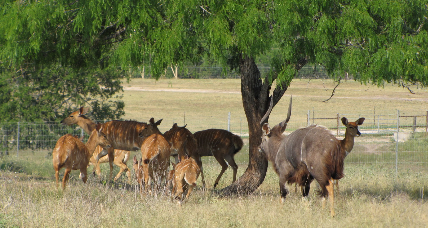 About the Lonesome Bull Ranch