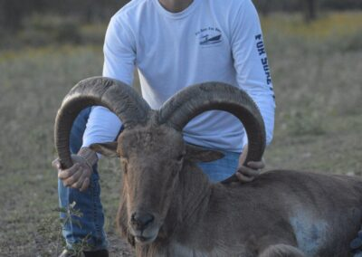 Aoudad Hunt