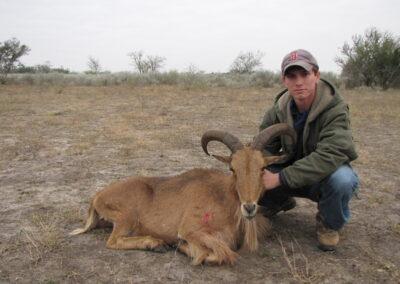 Aoudad Meat Hunt