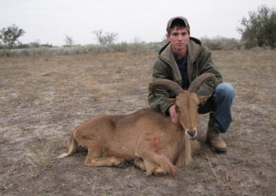 Aoudad Meat Hunt Texas