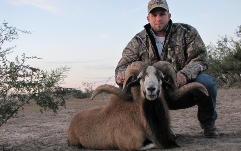 Corsican Exotic Hunt in Texas