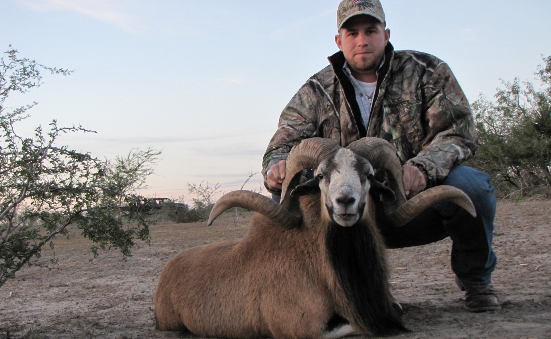 Texas Corsican Sheep Hunting