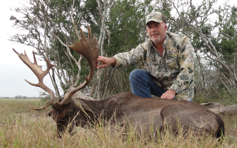 Fallow Deer Exotic Hunt in Texas