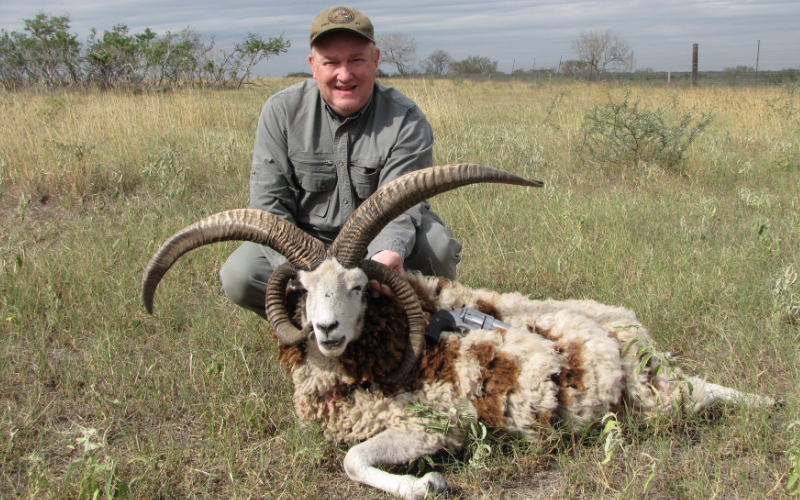 Jacob Sheep Exotic Hunt in Texas