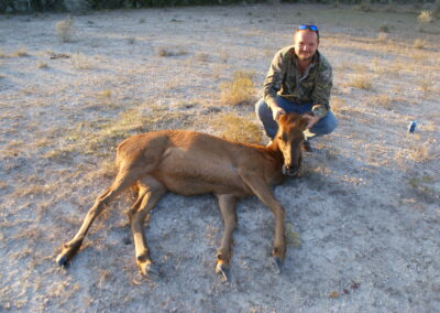 Red Stag Meat Hunt Texas