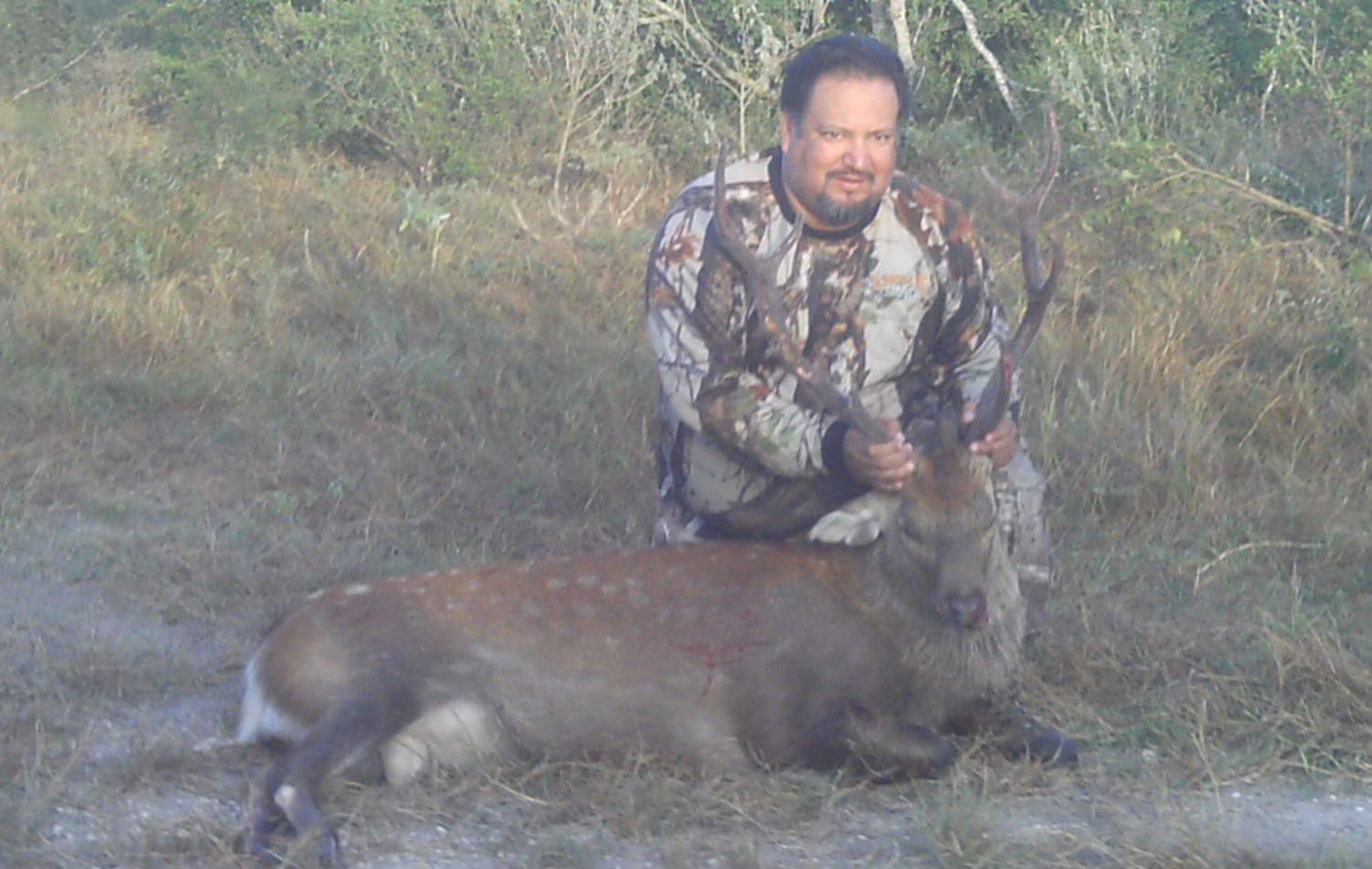 Sika Deer Hunting in Texas