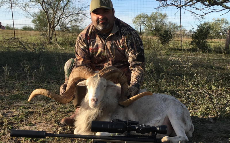 Texas Dall Sheep Exotic Hunt in Texas