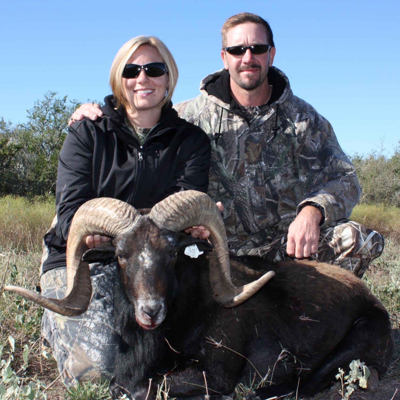 Trophy Mouflon Hunting