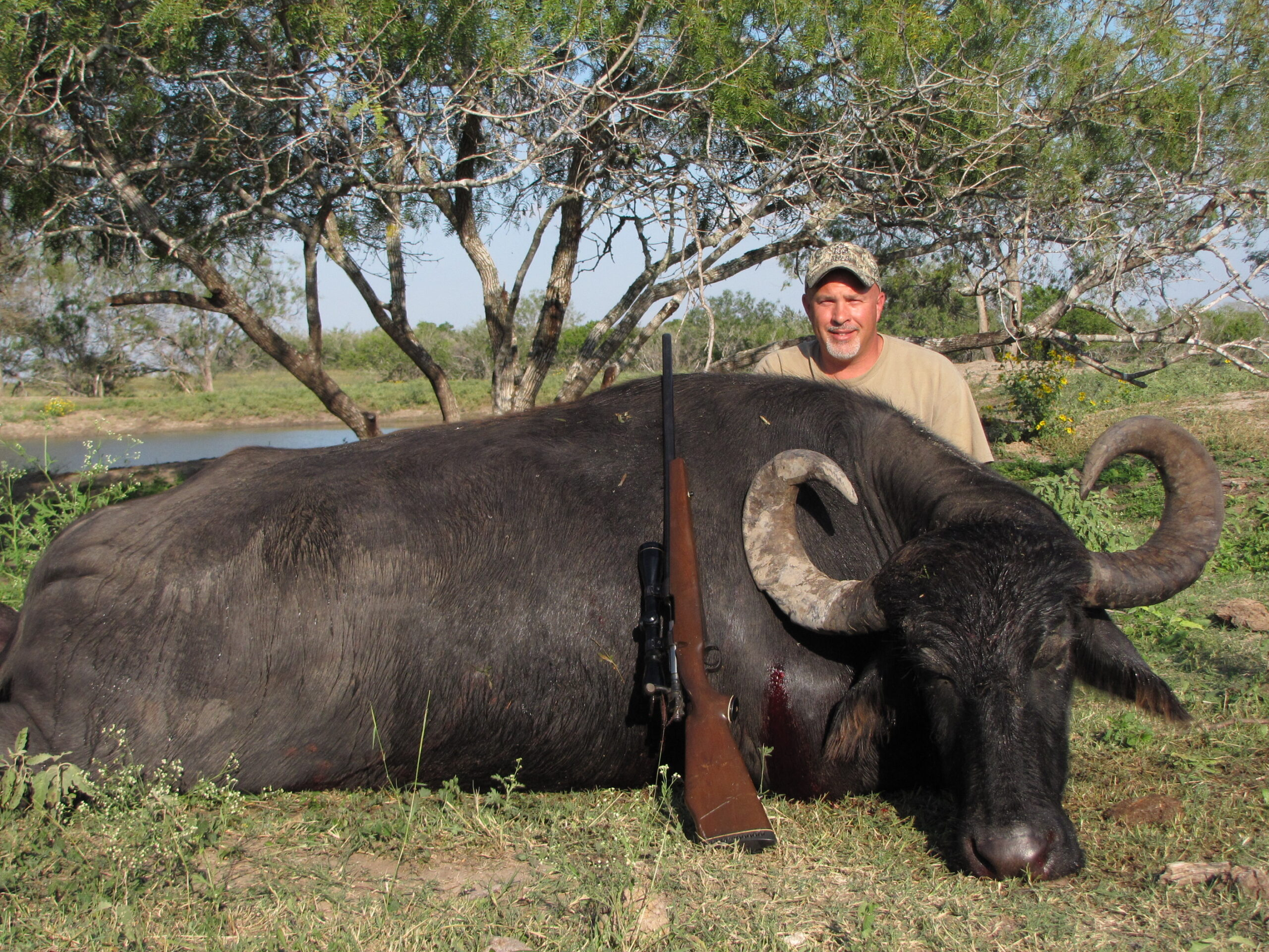 Water Buffalo Hunting in Texas