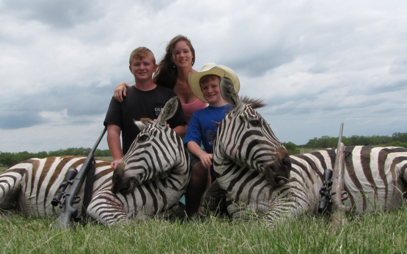 Zebra Exotic Hunt in Texas