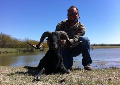 Black Hawaiian Sheep Hunt TX