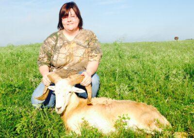 TX Corsican Sheep Hunt