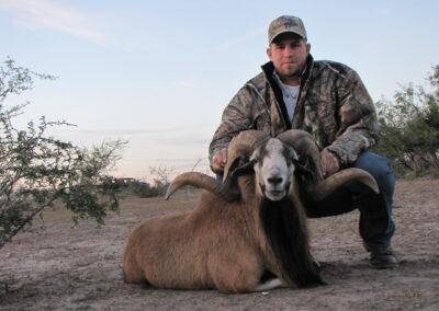Texas Corsican Sheep Hunt