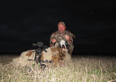 Texas Four Horned Jacob's Sheep Hunt