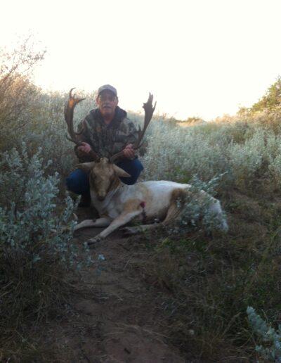 Fallow Deer Hunt 2