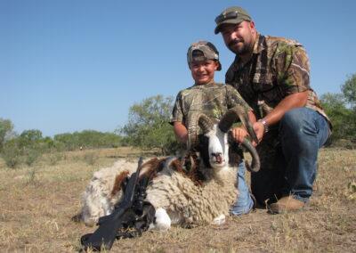 Jacob Sheep Hunt 1