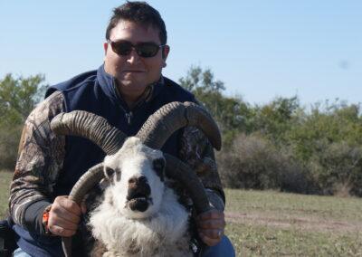 Jacob Sheep Hunt 2