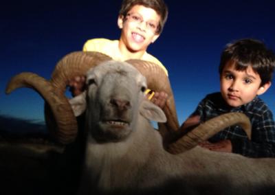 Texas Dall Sheep Hunt 2