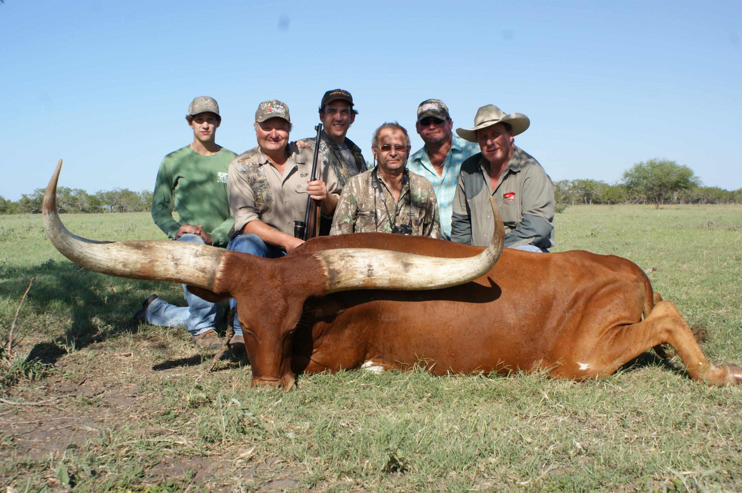 Watusi Hunting in Texas