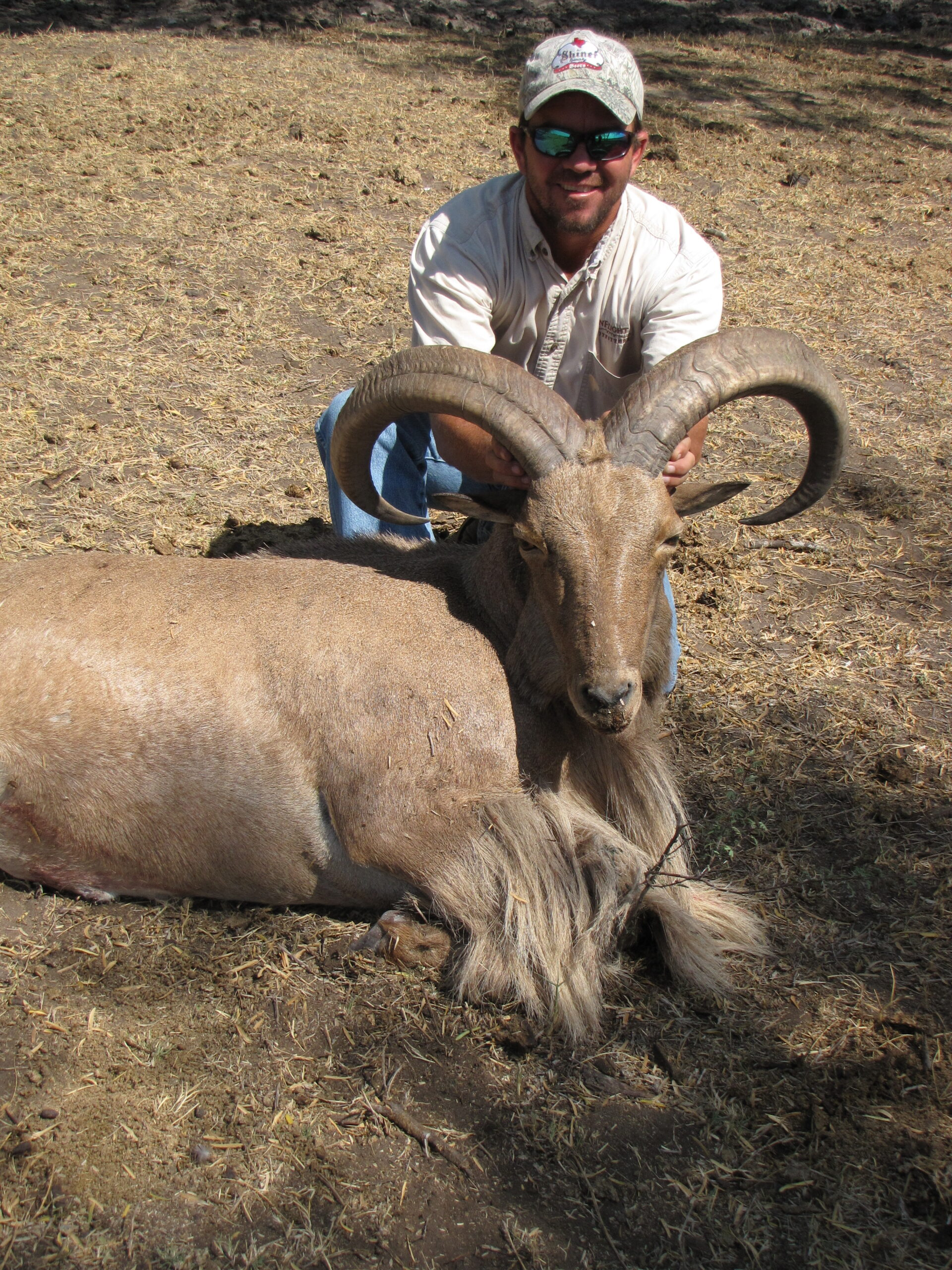 Aoudad Hunting in Texas