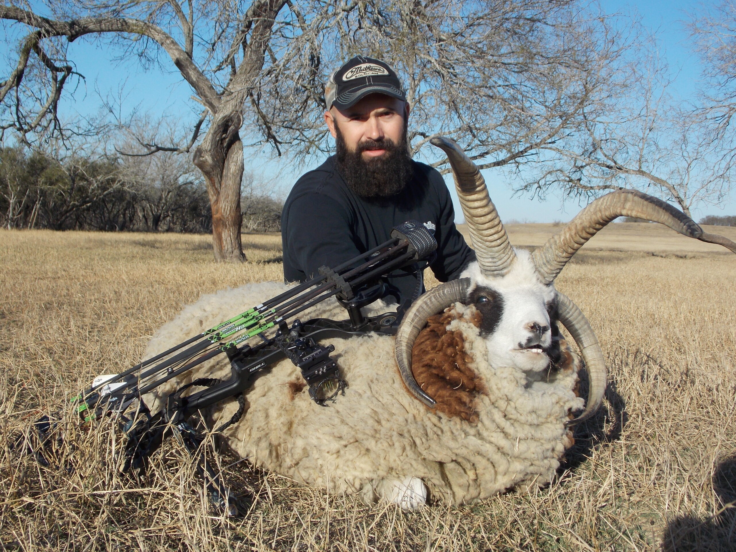 Trophy Four Horned Jacob Sheep Hunting